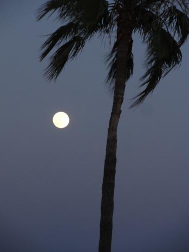Moon in Tucson. Photo: PhanCanhLoi.