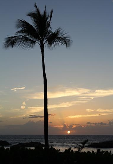 Dung - Hawaii hoang hon