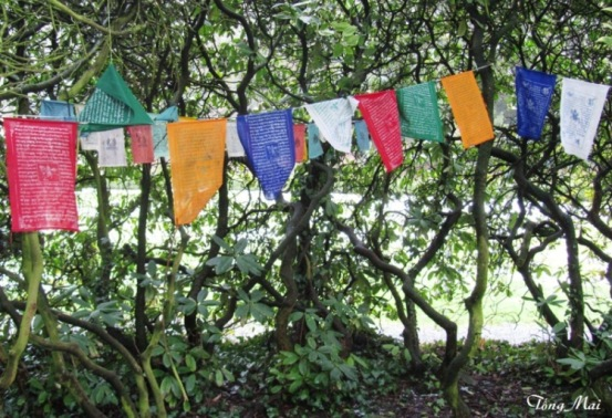 Prayer Flags - Tibetan Institute - Photo: Tống Mai