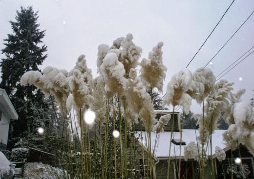 Snow in Seatle - Photo: Vandungsilk