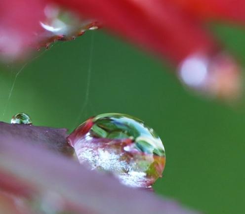 Màu hy vọng - Photo: Vandungsilk