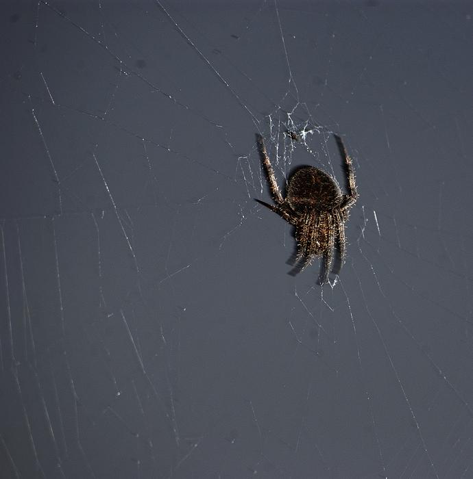 spider13_b