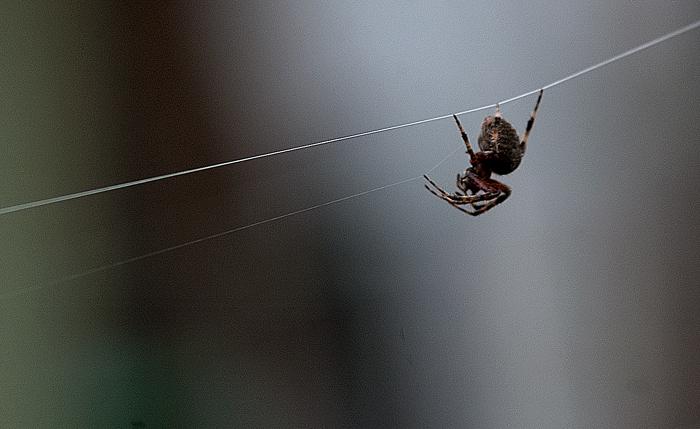 spider14_b