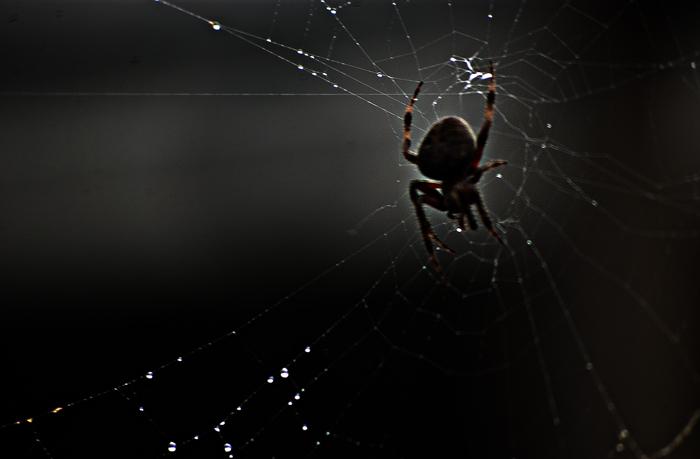 spider1+5_b
