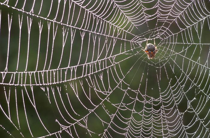spider1_b