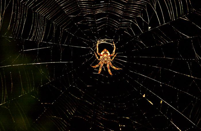 spider_b
