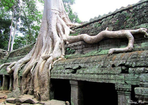 Ta Phrom - Photo: TốngMai