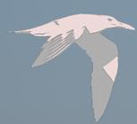 DSC_9248_e2_logo